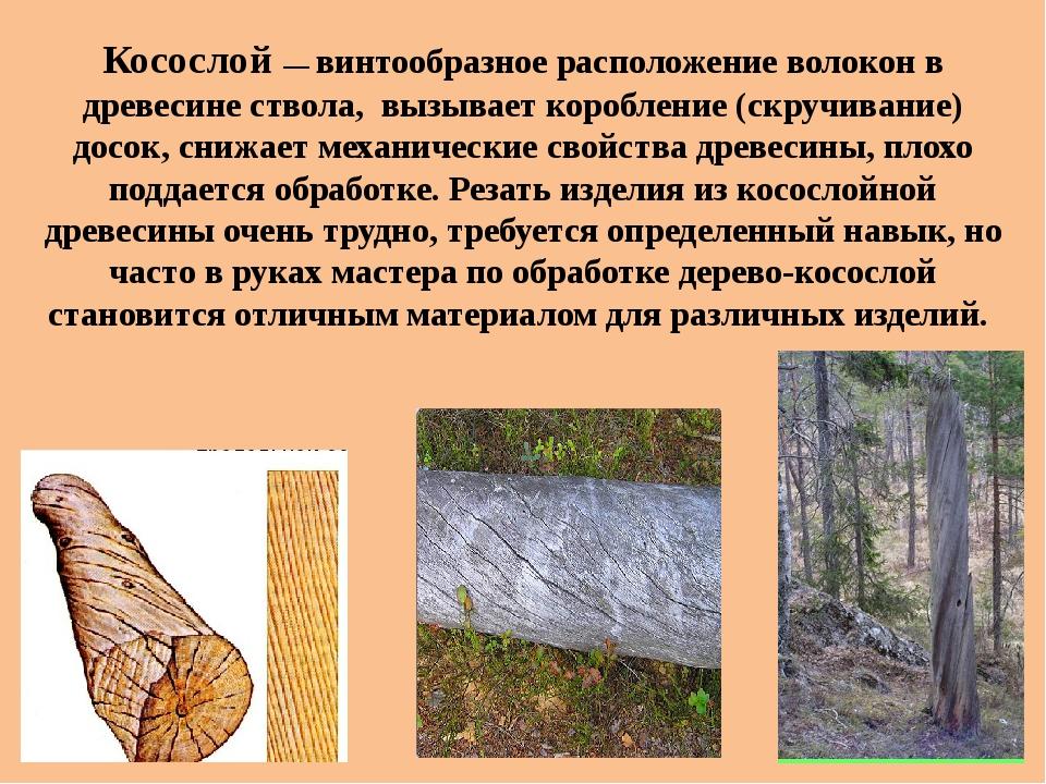 Пороки древесины и их влияние на качество