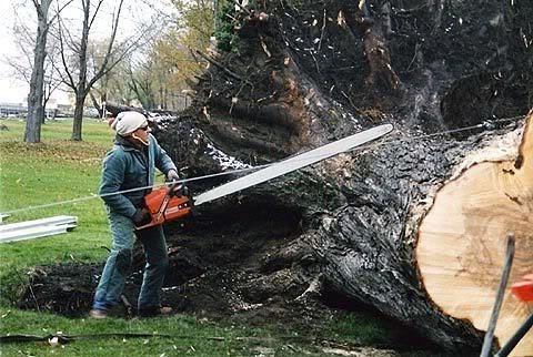 Распилка бревна, правила повала деревьев — порядок, алгоритм