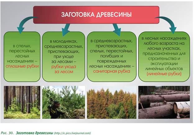 Совершенствование технологии механической окорки лесоматериалов. часть 1