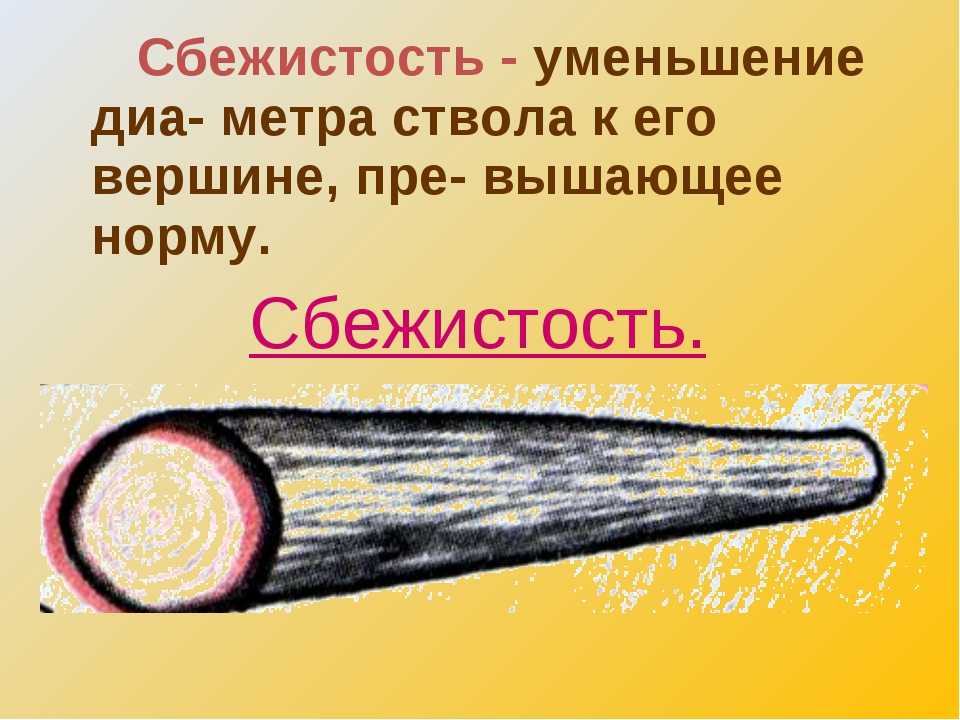 Описание дефектов, вредителей и пороков древесины, включая гниение и свилеватость