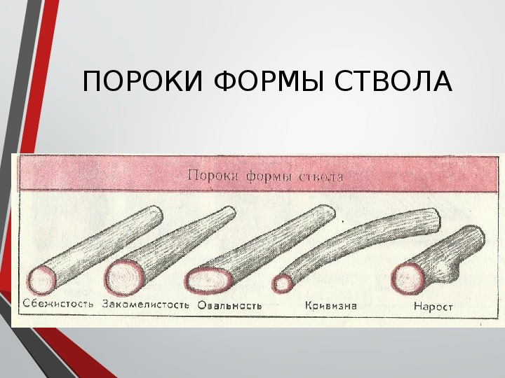 Древесина. виды, свойства, классификация и пороки древесины