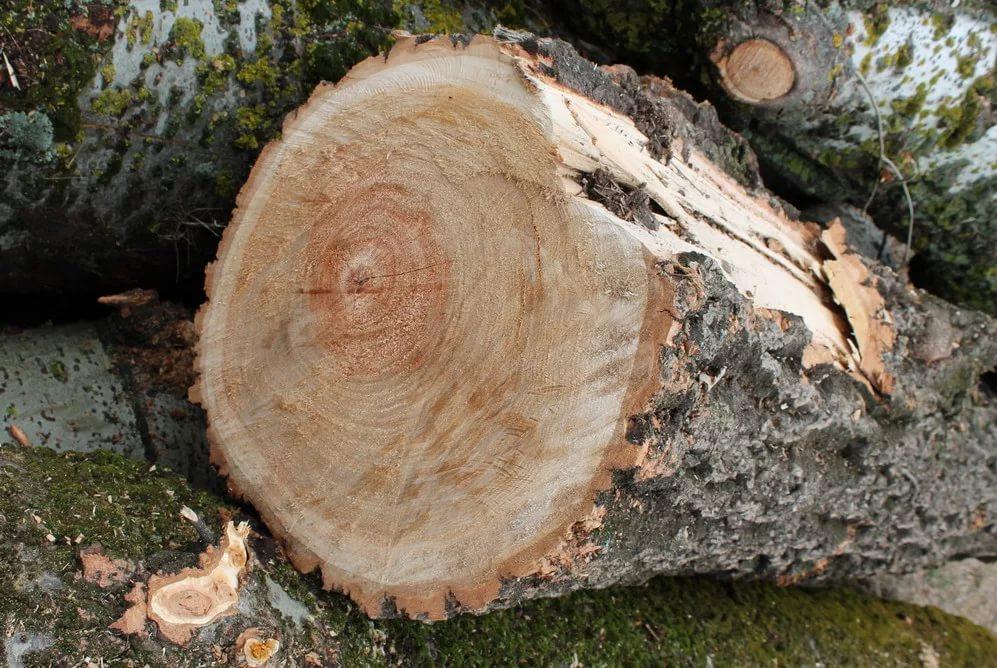 Дефекты возможные при сушке дерева и способы их предупреждение