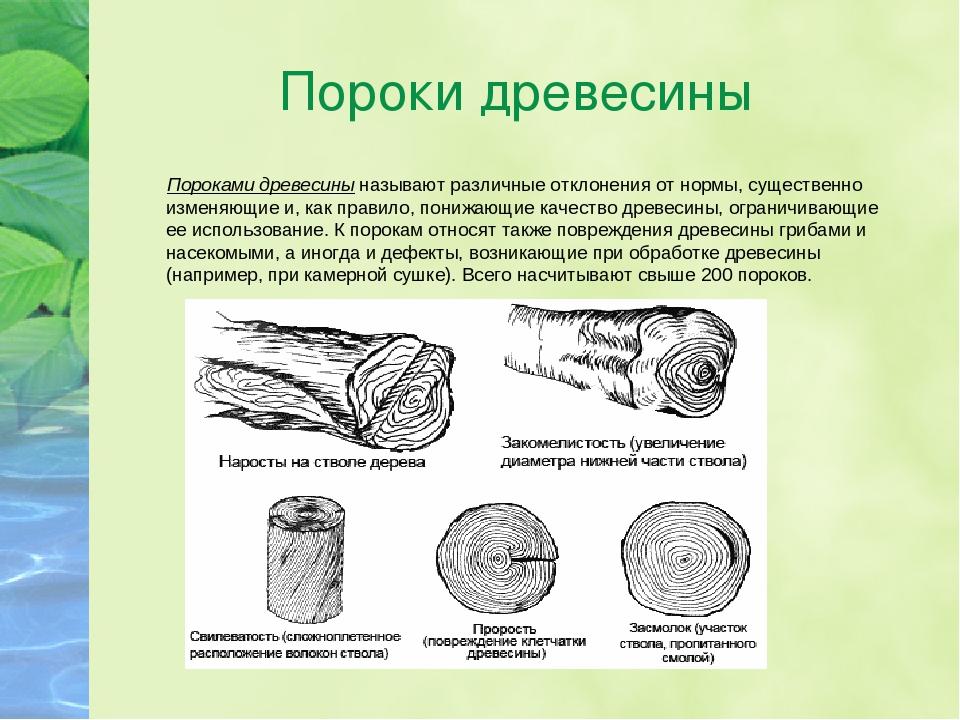 Пороки древесины: виды, гост, влияние на качество